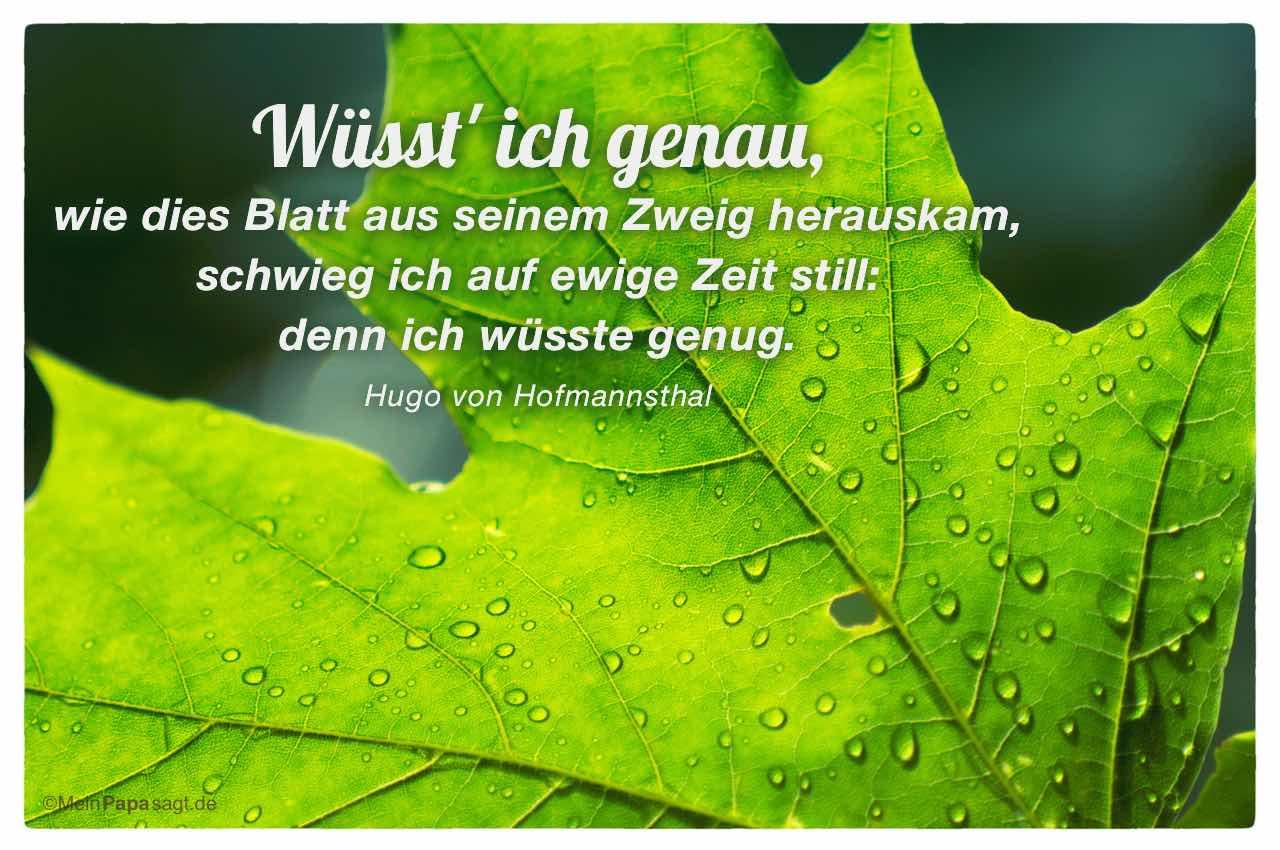 Ahornblatt mit dem Hugo von Hofmannsthal Zitat: Wüsst' ich genau, wie dies Blatt aus seinem Zweig herauskam, schwieg ich auf ewige Zeit still: denn ich wüsste genug. Hugo von Hofmannsthal