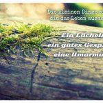 Moos auf Baumstamm mit dem Spruch: Die kleinen Dinge sind es, die das Leben ausmachen. Ein Lächeln, ein gutes Gespräch, eine Umarmung.