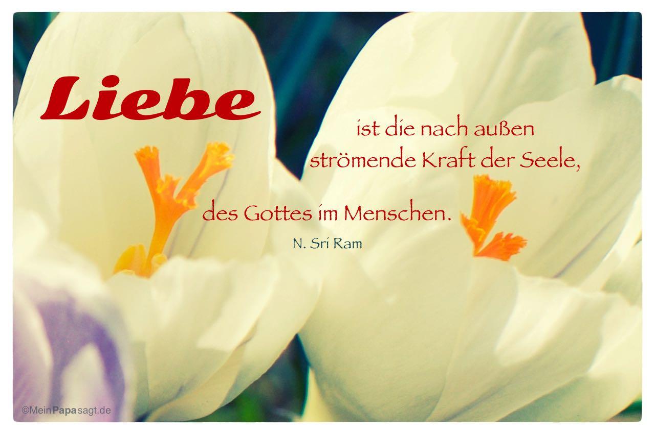 Orchideen mit dem N. Sri Ram Zitat: Liebe ist die nach außen strömende Kraft der Seele, des Gottes im Menschen. N. Sri Ram