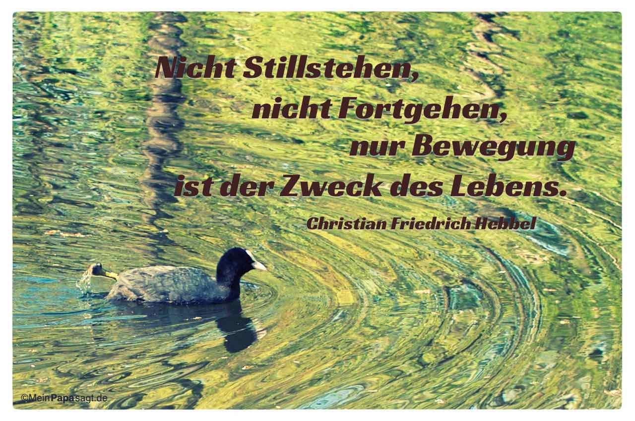 Blässhuhn mit dem Christian Friedrich Hebbel Zitat: Nicht Stillstehen, nicht Fortgehen, nur Bewegung ist der Zweck des Lebens. Christian Friedrich Hebbel