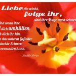 Blütenstempel mit dem Khalil Gibran Zitat: Wenn die Liebe dir winkt, folge ihr, sind ihre Wege auch schwer und steil. Und wenn ihre Flügel dich umhüllen, gib dich ihr hin, auch wenn das unterm Gefieder versteckte Schwert dich verwunden kann. Khalil Gibran