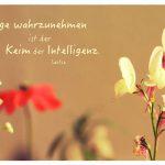 Kleine Blüten mit dem Laotse Zitat: Dinge wahrzunehmen ist der Keim der Intelligenz. Laotse