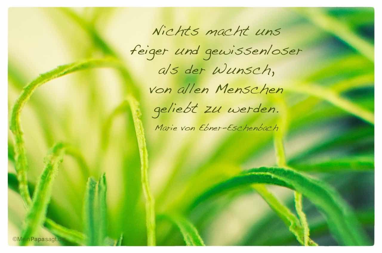 Gräser mit dem Marie von Ebner-Eschenbach Zitat: Nichts macht uns feiger und gewissenloser als der Wunsch, von allen Menschen geliebt zu werden. Marie von Ebner-Eschenbach