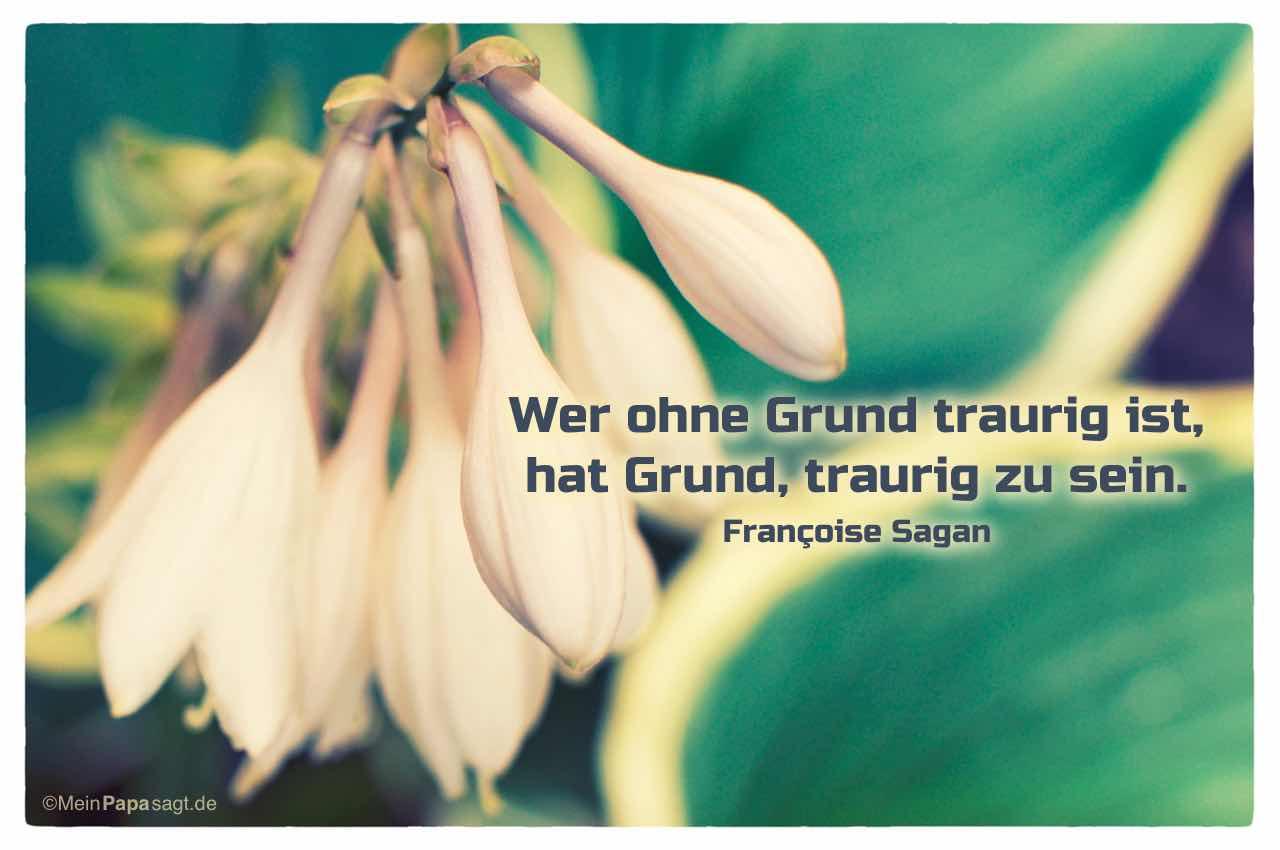 Blütenköpfe mit dem Françoise Sagan Zitat: Wer ohne Grund traurig ist, hat Grund, traurig zu sein. Françoise Sagan