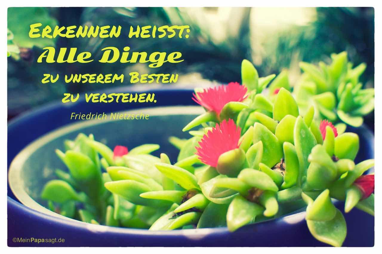Pflanze mit dem Nietzsche Zitat: Erkennen heißt: Alle Dinge zu unserem Besten zu verstehen. Friedrich Nietzsche