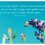 Lavendel mit dem Diane Ackerman Zitat: Ich will am Ende meines Lebens nicht feststellen, dass ich es nur der Länge nach gelebt habe. Ich will es auch in seiner Breite leben. Diane Ackerman