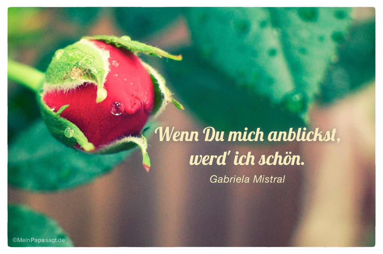 Rosenknospe mit dem Gabriela Mistral Zitat: Wenn Du mich anblickst, werd' ich schön. Gabriela Mistral
