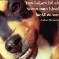 Das Leben ist ein Spiegel: Wenn man hineinlächelt, lacht es zurück...