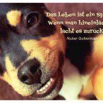 fröhlicher Hund mit dem Gulbenkian Zitat: Das Leben ist ein Spiegel: Wenn man hineinlächelt, lacht es zurück. Nubar Gulbenkian