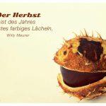 lachende Kastanie mit dem Meurer Zitat: Der Herbst ist des Jahres schönstes farbiges Lächeln. Willy Meurer