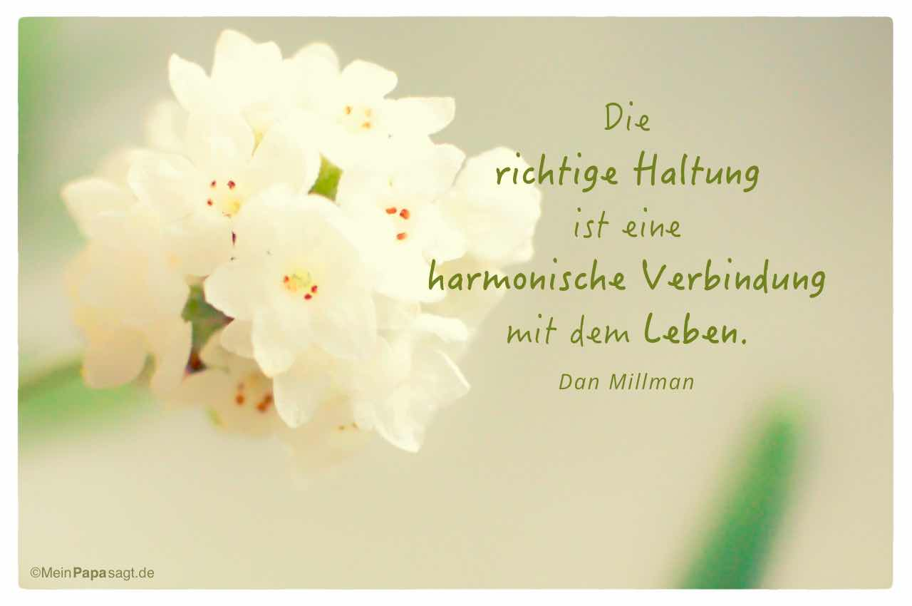 Blüten mit dem Dan Millman Zitat: Die richtige Haltung ist eine harmonische Verbindung mit dem Leben. Dan Millman