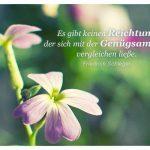 Blütenkelche mit dem Schlegel Zitat: Es gibt keinen Reichtum, der sich mit der Genügsamkeit vergleichen ließe. Friedrich Schlegel