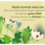 Blütenköpfe mit dem Hesse Zitat: Heim kommt man nie. Aber wo befreundete Wege zusammenlaufen, da sieht die ganze Welt für eine Stunde wie Heimat aus. Hermann Hesse