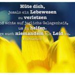 Sonnenblume mit dem Krishnamurti Zitat: Hüte dich, jemals ein Lebewesen zu verletzen und achte auf jegliche Gelegenheit, um zu helfen. Füge auch niemandem ein Leid zu. Krishnamurti
