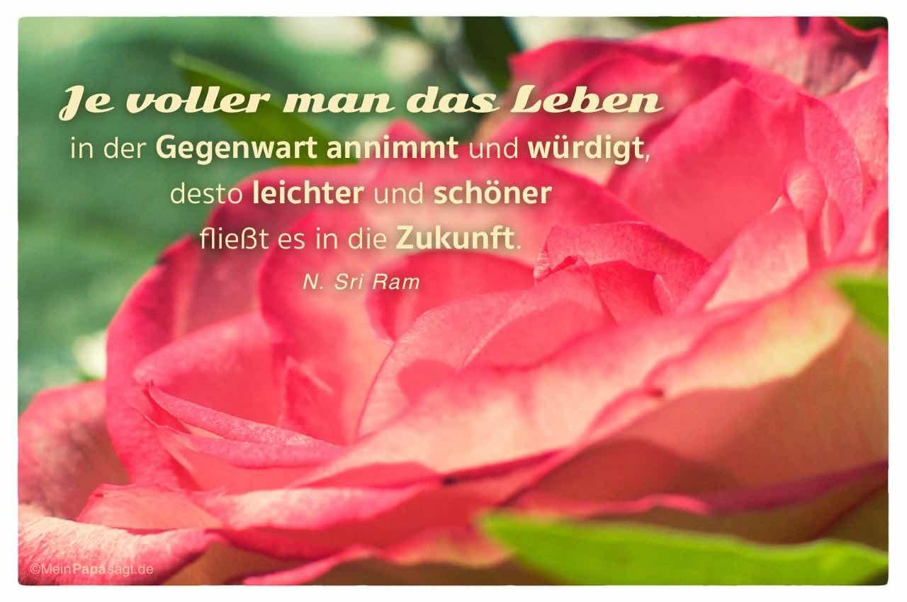 Rosa Rose mit dem Sri Ram Zitat: Je voller man das Leben in der Gegenwart annimmt und würdigt, desto leichter und schöner fließt es in die Zukunft. N. Sri Ram