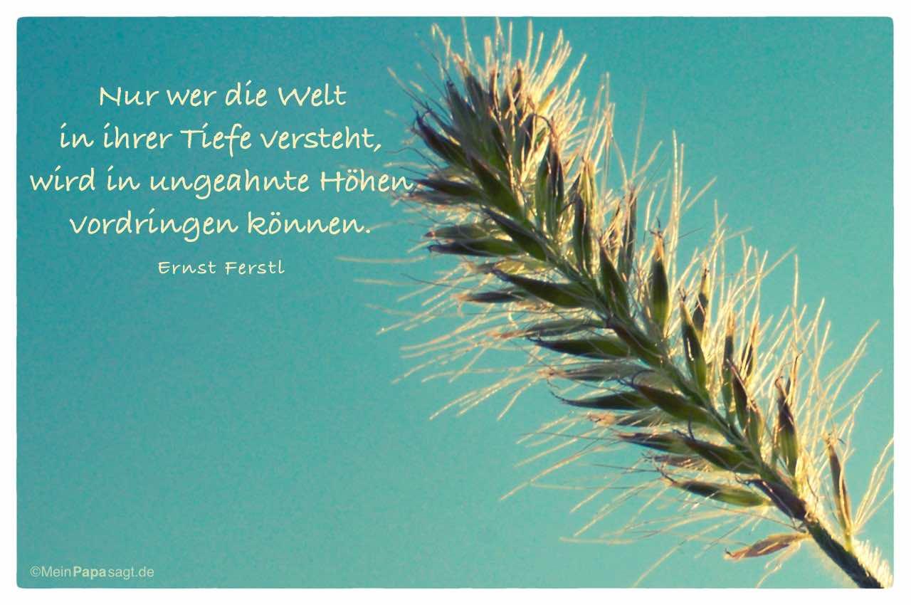 Gräser mit dem Ernst Ferstl Zitat: Nur wer die Welt in ihrer Tiefe versteht, wird in ungeahnte Höhen vordringen können. Ernst Ferstl