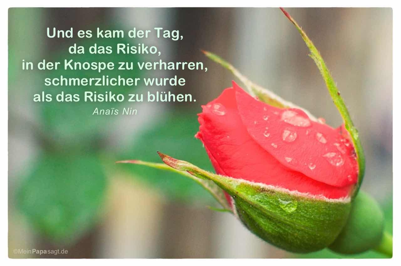 Rosenknospe mit dem Anaïs Nin Zitat: Und es kam der Tag, da das Risiko, in der Knospe zu verharren, schmerzlicher wurde als das Risiko zu blühen. Anaïs Nin