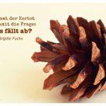 Tannenzapfen mit dem Fuchs Zitat: Es kommt der Herbst und damit die Frage: Was fällt ab? Brigitte Fuchs