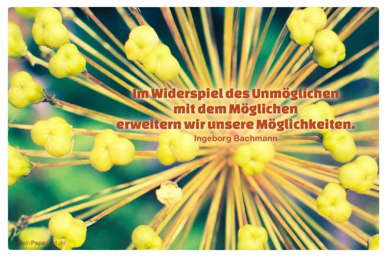 Pflanze mit dem Bachmann Zitat: Im Widerspiel des Unmöglichen mit dem Möglichen erweitern wir unsere Möglichkeiten. Ingeborg Bachmann