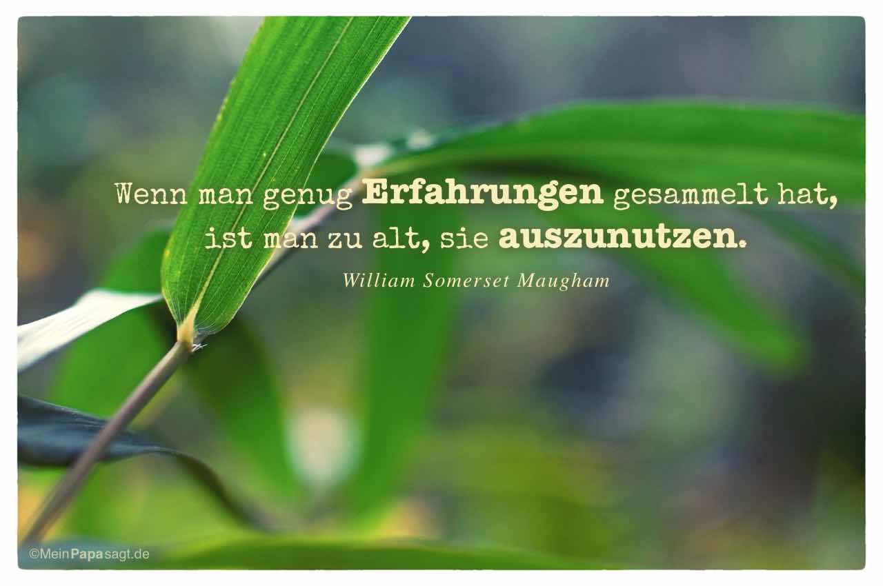 Schilf - grüner Zweig mit dem Somerset Maugham Zitat: Wenn man genug Erfahrungen gesammelt hat, ist man zu alt, sie auszunutzen. William Somerset Maugham