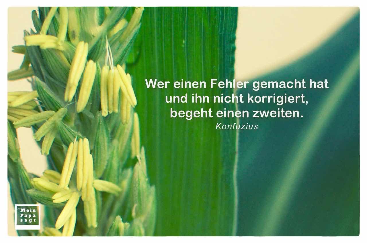 Mais-Pflanze mit dem Konfuzius Zitat: Wer einen Fehler gemacht hat und ihn nicht korrigiert, begeht einen zweiten. Konfuzius
