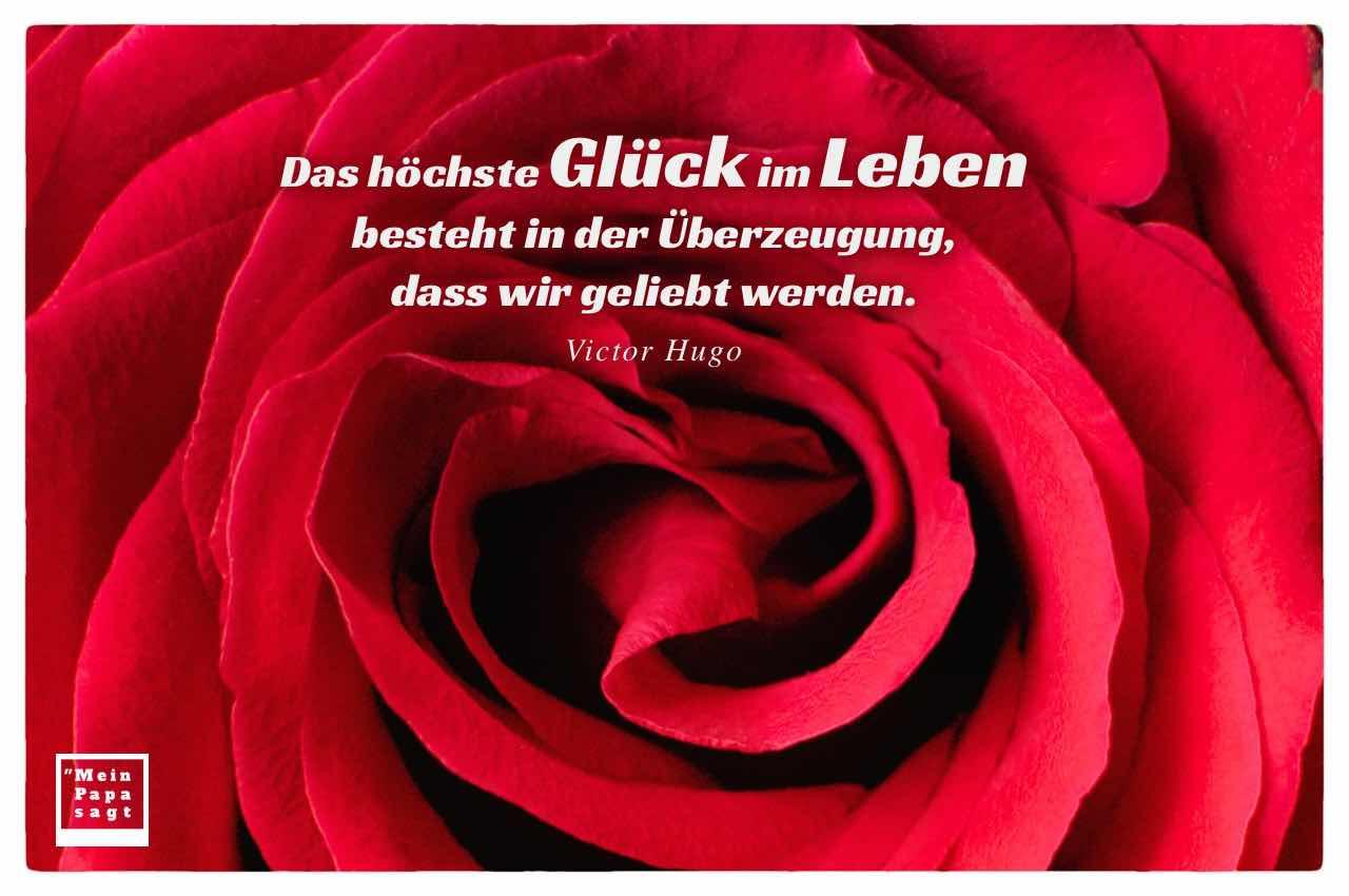 Rote Rose mit dem Hugo Zitat: Das höchste Glück im Leben besteht in der Überzeugung, dass wir geliebt werden. Victor Hugo