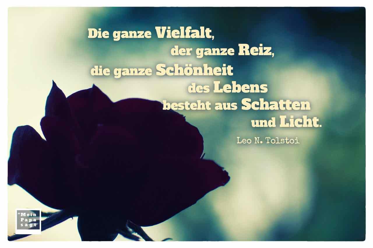 Rote Rose im Gegenlicht mit dem Tolstoi Zitat: Die ganze Vielfalt, der ganze Reiz, die ganze Schönheit des Lebens besteht aus Schatten und Licht. Leo N. Tolstoi