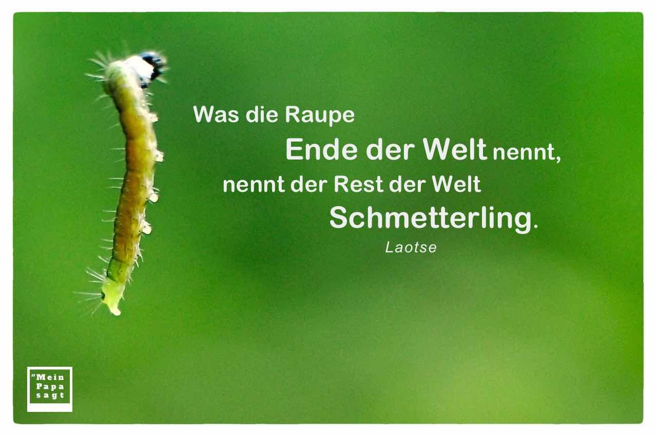 Raupe mit Mein Papa sagt Laotse Zitate Bilder: Was die Raupe Ende der Welt nennt, nennt der Rest der Welt Schmetterling. Laotse