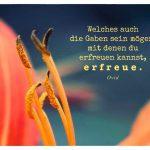 Orangefarbene Lilie mit dem Ovid Zitat: Welches auch die Gaben sein mögen, mit denen du erfreuen kannst, erfreue. Ovid