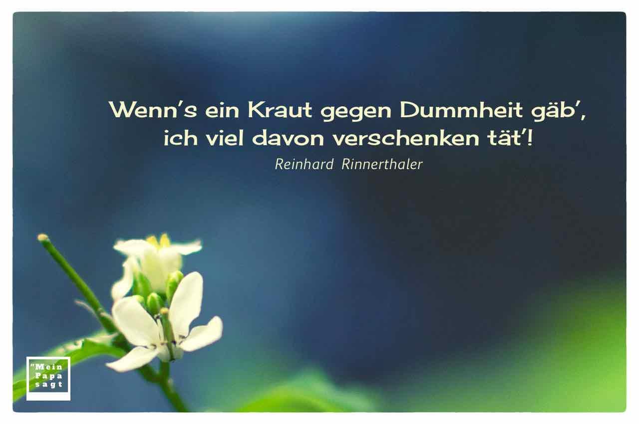 Blüte mit dem Rinnerthaler Zitat: Wenn's ein Kraut gegen Dummheit gäb', ich viel davon verschenken tät'! Reinhard Rinnerthaler