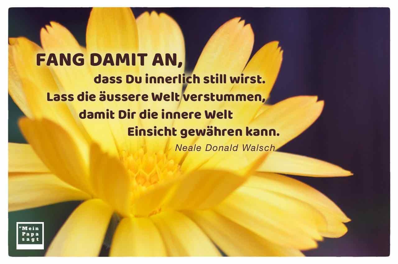 Gelbe Blüte mit dem Walsch Zitat: Fang damit an, dass Du innerlich still wirst. Lass die äussere Welt verstummen, damit Dir die innere Welt Einsicht gewähren kann. Neale Donald Walsch