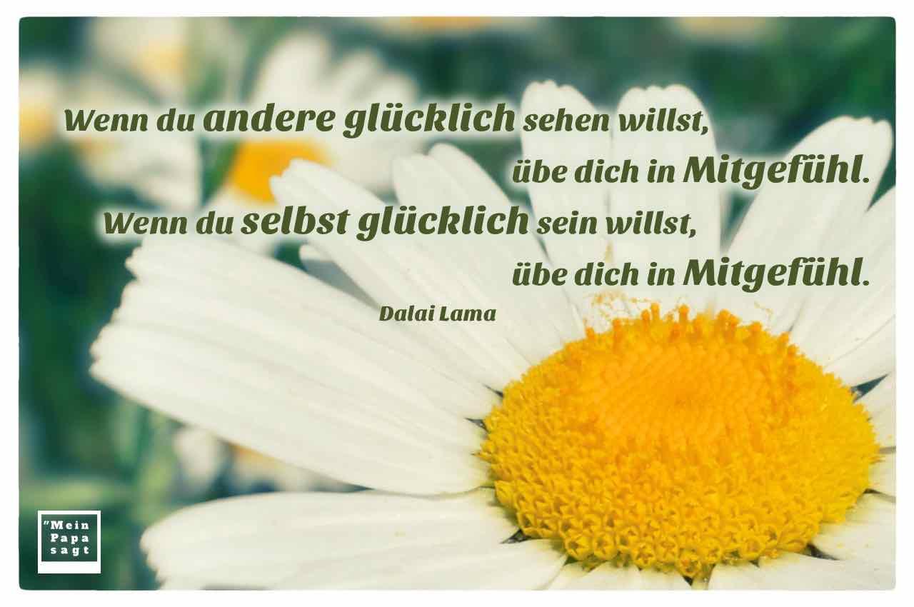 Gänseblümchen mit dem Dalai Lama Zitat: Wenn du andere glücklich sehen willst, übe dich in Mitgefühl. Wenn du selbst glücklich sein willst, übe dich in Mitgefühl. Dalai Lama