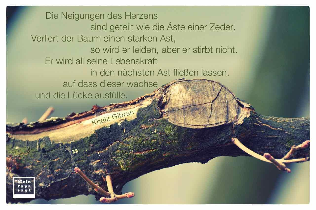 Angesägter Ast mit dem Gibran Zitat: Die Neigungen des Herzens sind geteilt wie die Äste einer Zeder. Verliert der Baum einen starken Ast, so wird er leiden, aber er stirbt nicht. Er wird all seine Lebenskraft in den nächsten Ast fließen lassen, auf dass dieser wachse und die Lücke ausfülle. Khalil Gibran