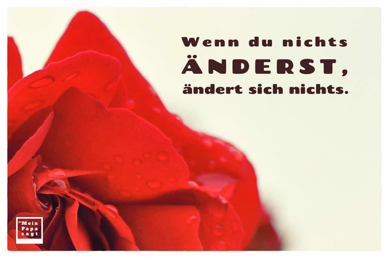 Rote Rose mit Regentropfen und dem Spruch: Wenn du nichts änderst, ändert sich nichts.