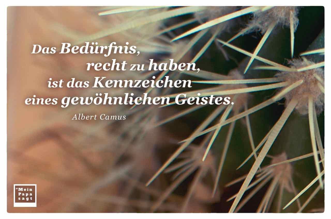 Kaktus mit dem Camus Zitat: Das Bedürfnis, recht zu haben, ist das Kennzeichen eines gewöhnlichen Geistes. Albert Camus