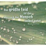 Pflanzenblatt mit Regentropfen und dem Sperber Zitat: Das größte Leid ist das, was sich der Mensch selbst antut. Manès Sperber