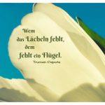 Blütenblatt mit dem Capote Zitat: Wem das Lächeln fehlt, dem fehlt ein Flügel. Truman Capote