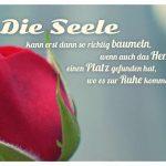 Rosen-Kopf mit dem Spruch: Die Seele kann erstdann so richtig baumeln, wenn auch das Herz einen Platz gefunden hat, wo es zur Ruhe kommen kann.