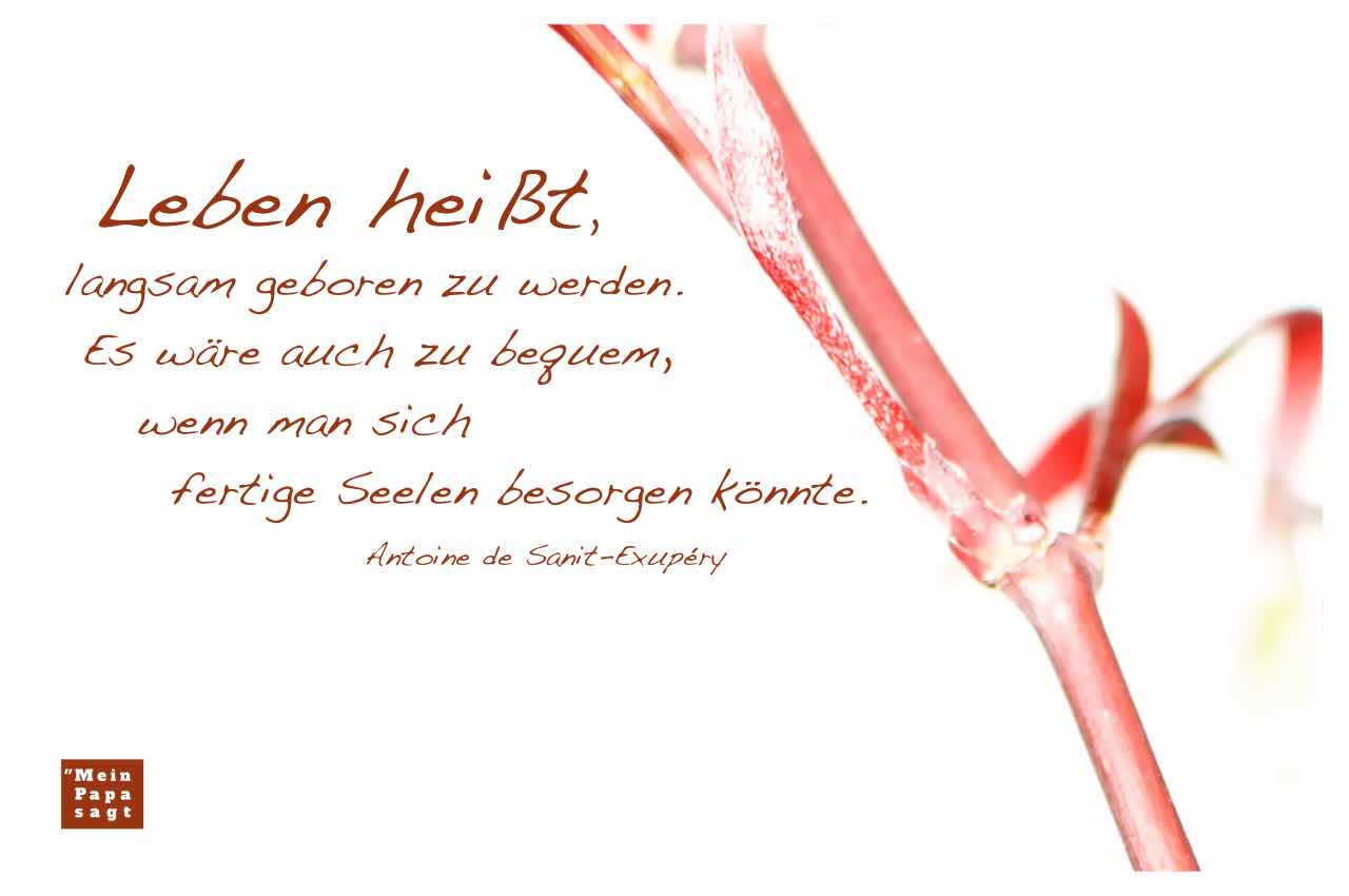 japanischer Ahorn mit dem Sanit-Exupéry Zitat: Leben heißt, langsam geboren zu werden. Es wäre auch zu bequem, wenn man sich fertige Seelen besorgen könnte. Antoine de Sanit-Exupéry