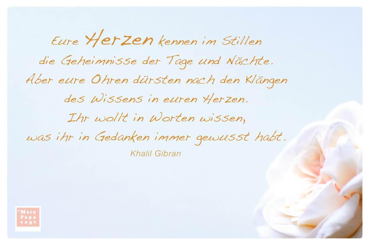 Rosenblüte mit dem Gibran Zitat: Eure Herzen kennen im Stillen die Geheimnisse der Tage und Nächte. Aber eure Ohren dürsten nach den Klängen des Wissens in euren Herzen. Ihr wollt in Worten wissen, was ihr in Gedanken immer gewusst habt. Khalil Gibran