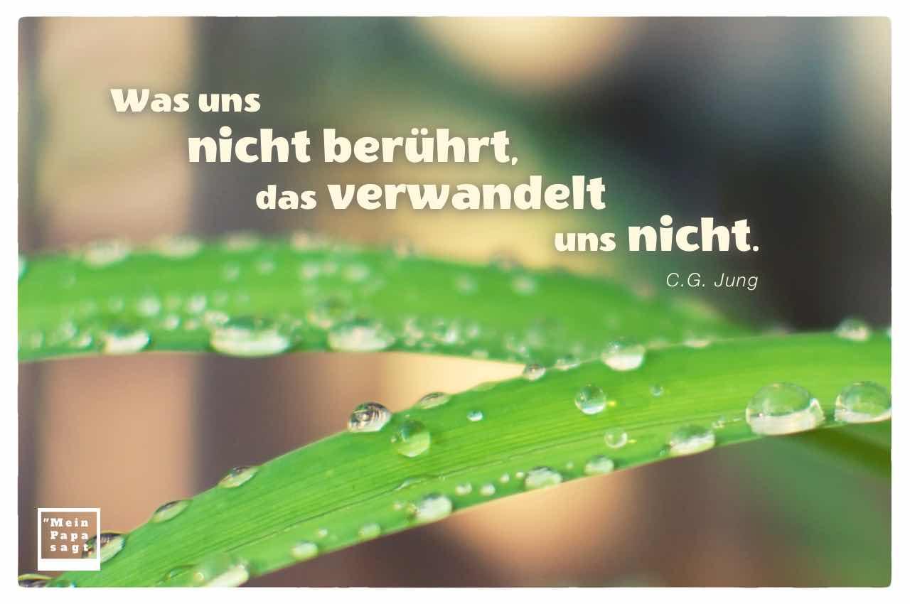 Wassertropfen auf Blättern mit dem Jung Zitat: Was uns nicht berührt, das verwandelt uns nicht. C.G. Jung