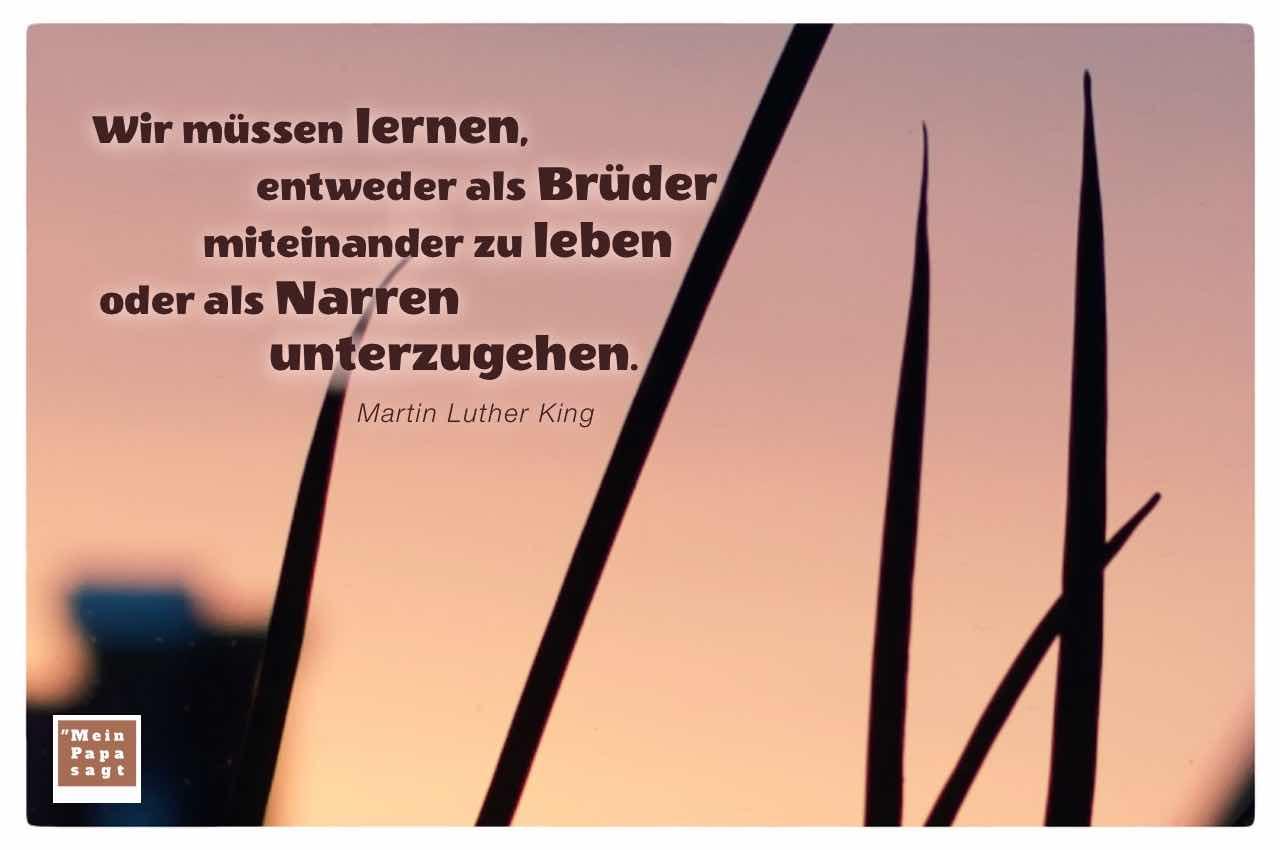 Gräser vor Sonnenuntergang mit dem King Zitat: Wir müssen lernen, entweder als Brüder miteinander zu leben oder als Narren unterzugehen. Martin Luther King