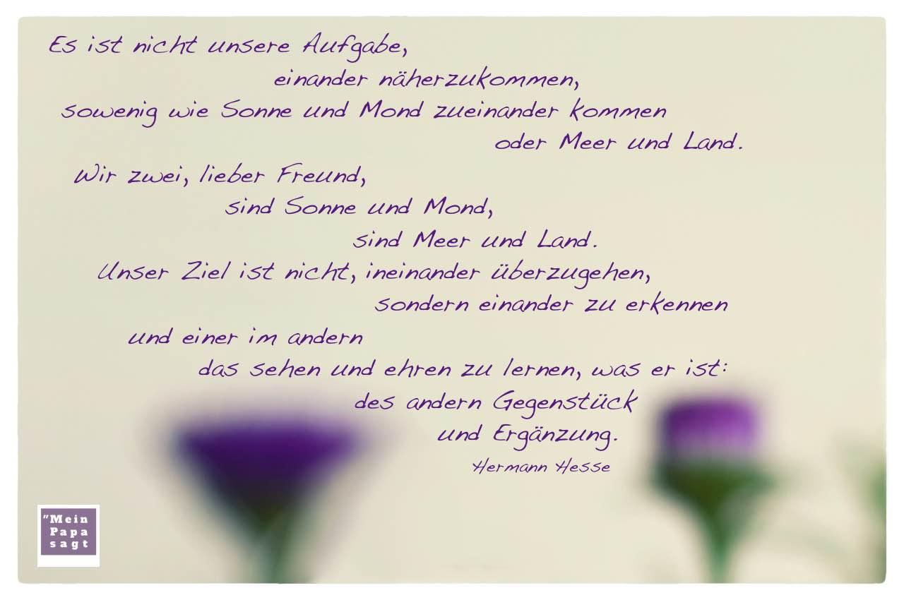 Herbst-Astern mit dem Hesse Zitat: Es ist nicht unsere Aufgabe, einander näherzukommen, sowenig wie Sonne und Mond zueinander kommen oder Meer und Land. Wir zwei, lieber Freund, sind Sonne und Mond, sind Meer und Land. Unser Ziel ist nicht, ineinander überzugehen, sondern einander zu erkennen und einer im andern das sehen und ehren zu lernen, was er ist: des andern Gegenstück und Ergänzung. Hermann Hesse