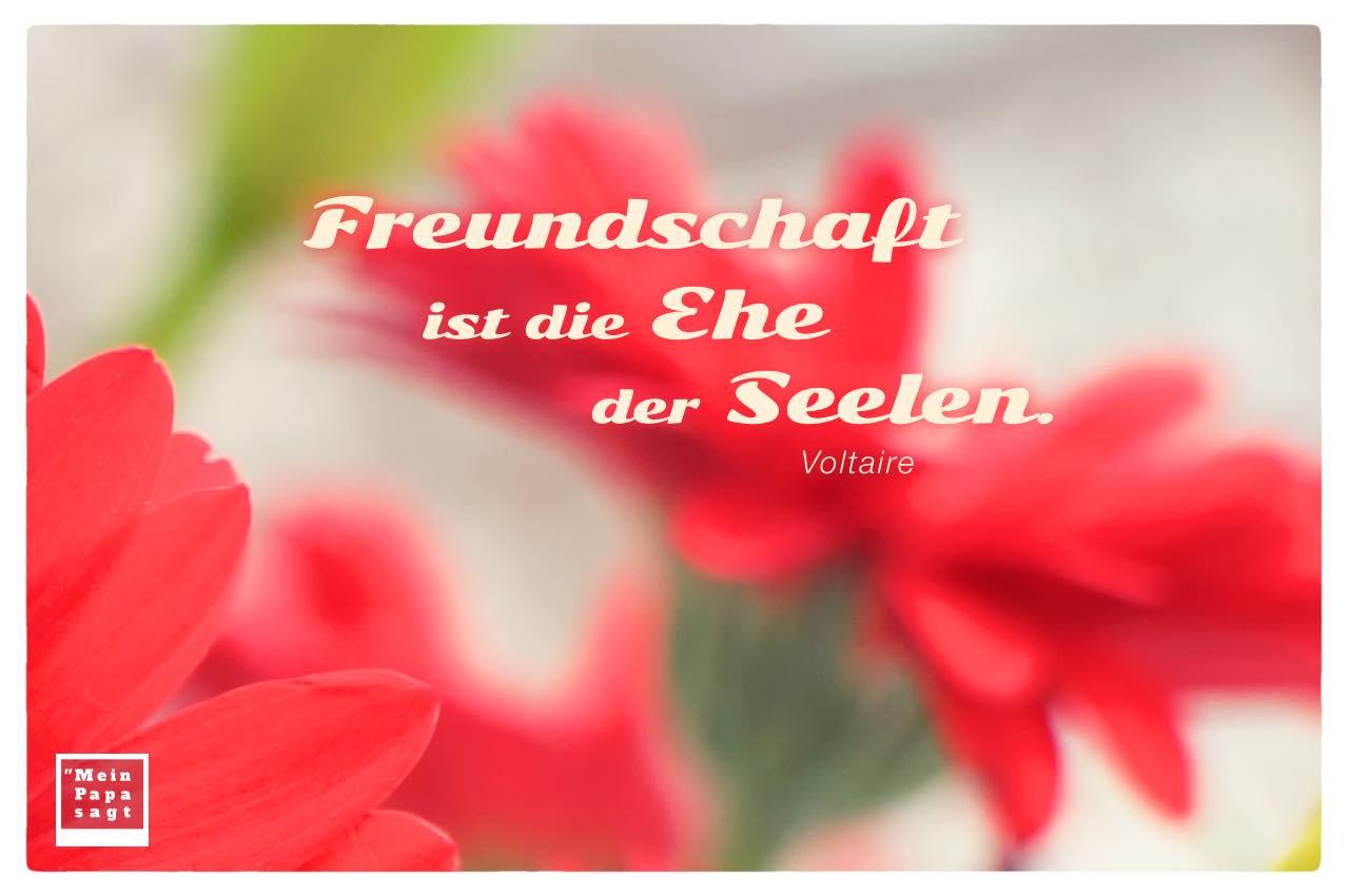 Blumen unscharf mit Mein Papa sagt Voltaire Zitate Bilder: Freundschaft ist die Ehe der Seelen. Voltaire
