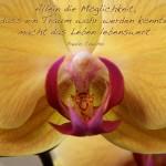 Blütenkelch einer Orchidee mit dem Coelho Zitat: Allein die Möglichkeit, dass ein Traum wahr werden könnte, macht das Leben lebenswert. Paulo Coelho