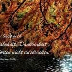 Herbstlich gefärbter Baum neigt sich im Gegenlicht über einen See