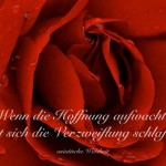 Nahaufnahme einer roten Rose mit der Asiatischen Weisheit: Wenn die Hoffnung aufwacht, legt sich die Verzweiflung schlafen. asiatische Weisheit