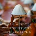 Kleiner Pilz im Laub mit dem Seneca Zitat: Wer Großes versucht, ist bewundernswert, auch wenn er fällt. Lucius Annaeus Seneca