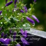 Balkonpflanze im Regen mit dem Walsch Zitat: Werde den Gedanken los, dass dein Glück von irgendetwas außerhalb deiner Selbst abhängt. Neale Donald Walsch
