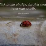 Marienkäfer auf Stein mit dem Schweitzer Zitat: Das Glück ist das einzige, das sich verdoppelt, wenn man es teilt. Albert Schweitzer